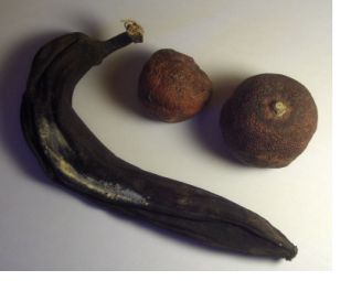 Exercice n°5 : Magnétiser un fruit Magnetisme_fruits